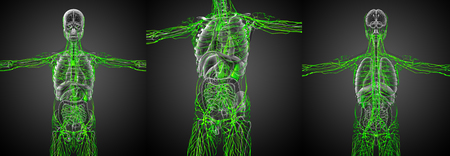 3d rendering medical illustration of the lymphatic system Stock Illustration - 74513280