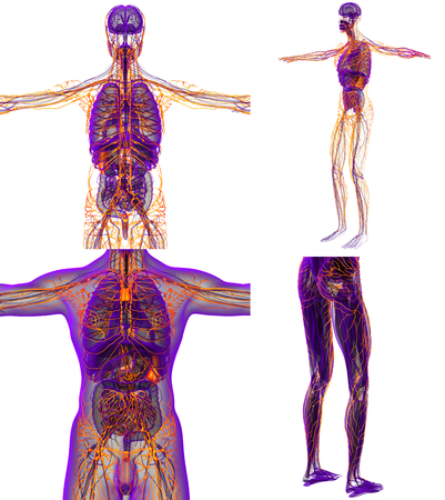 3d rendering medical illustration of the human lymphatic system Stock Photo
