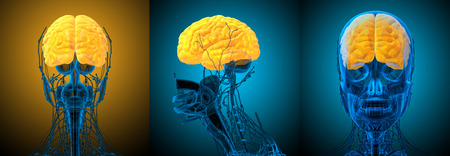 3d rendering medical illustration of the brain Stock Photo