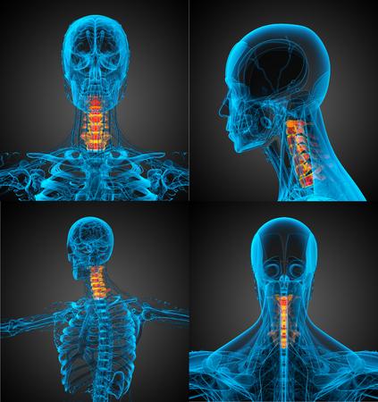 3d rendering medical illustration of the neck bone Stock Photo