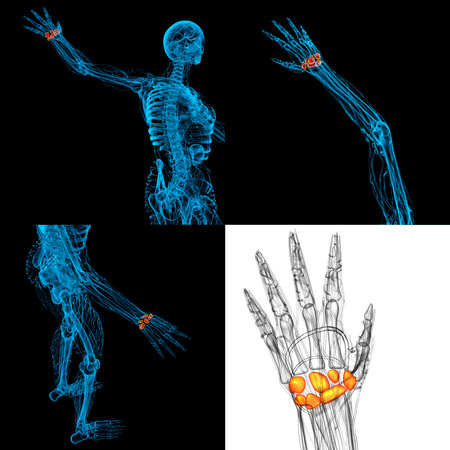 3D, representación, Ilustración, humano, carpal, huesos