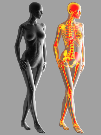 3d rendering of Human Body Bone Joint Pains Anatomy