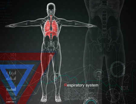 3d illustration of  respiratory system by X-rays on background