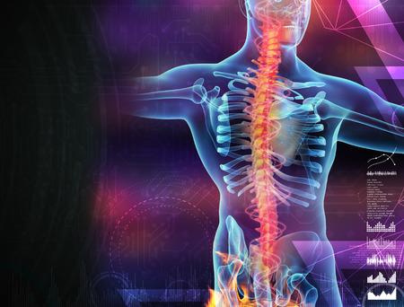Skeleton of the man with the backbone 版權商用圖片
