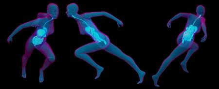 3d rendering illustration of the  digestive system