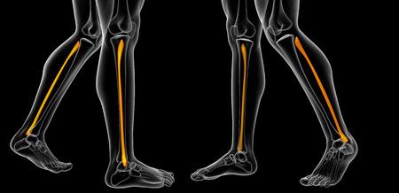 3d rendering illustration of fibula bone Stock Photo