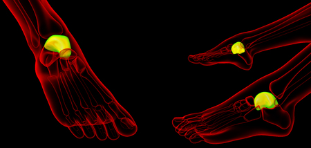 3d rendering illustration of the malleolus bone