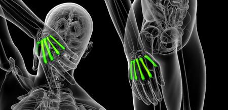 3d rendering illustration of metacarpal Banque d'images - 105042461