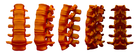 3drendering illustration of vertebrae