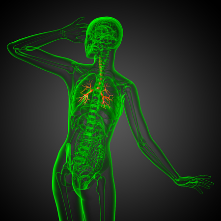3D medical illustration of the male bronchi - back view