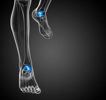 3d render illustration of the malleolus bone - front view