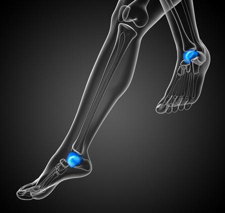 3d render illustration of the malleolus bone - side view
