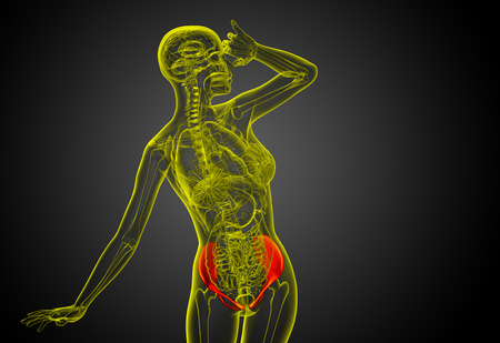 3D medical illustration of the pelvis bone - front view