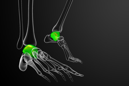3d render illustration of the talus bone - front view