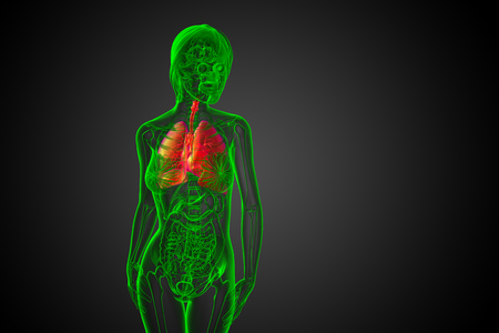 3d rendered illustration of the respiratort system - front view Stockfoto