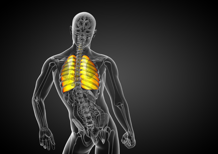 3d render medical illustration of the human respiratory system - back view Stockfoto