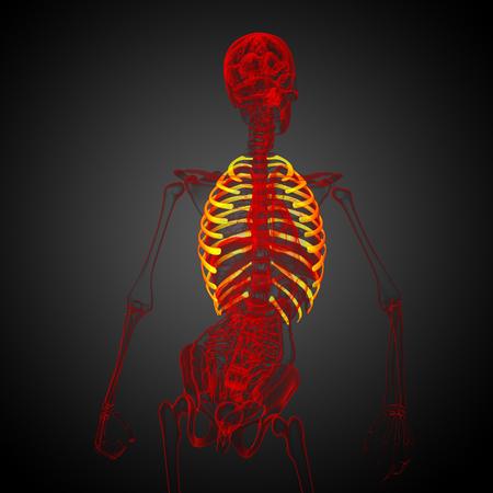 3d render medical illustration of the ribcage - side view