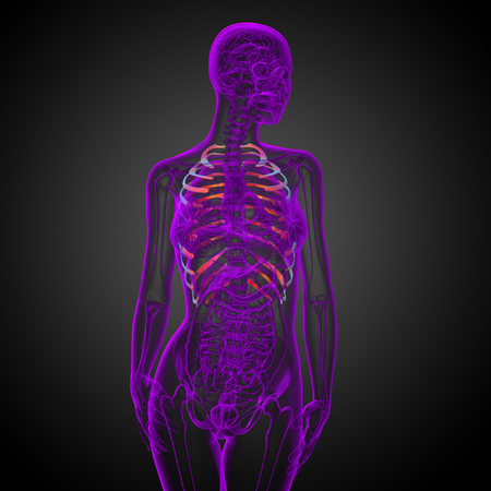 3d render medical illustration of the ribcage - side view