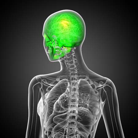 3d render medical illustration of the skull - back view