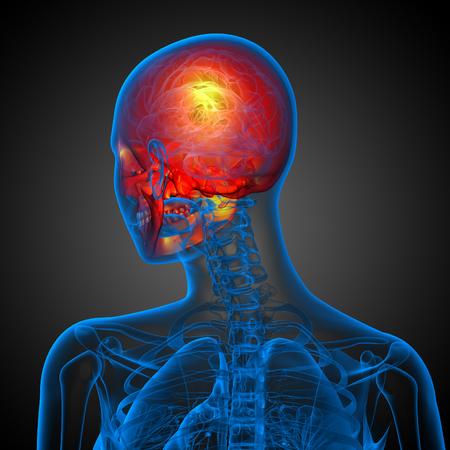3d render medical illustration of the skull - back view