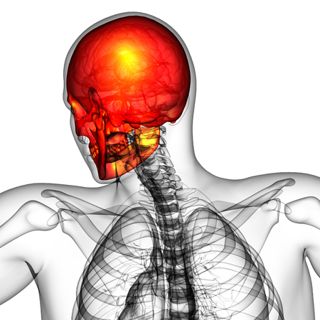 3d render medical illustration of the skull - back view Stockfoto - 113630851