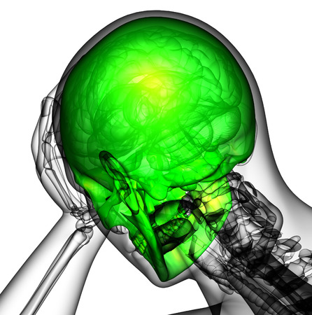 3d render human skull anatomy - back view Stock Photo