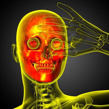 3d render medical illustration of the skull - front view