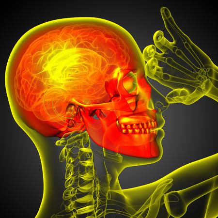 3d render medical illustration of the skull - side view