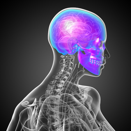 3d render medical illustration of the skull - side view