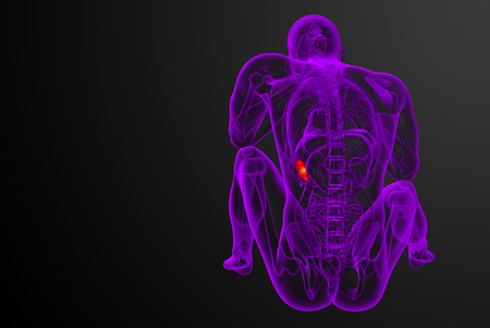 3d render medical illustration of the spleen - back view