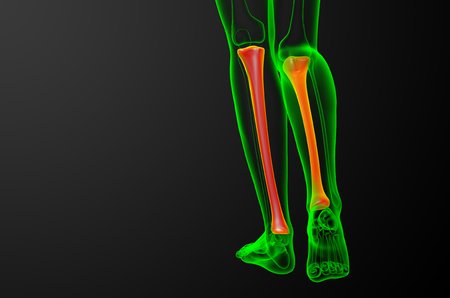 3d render medical illustration of the tibia bone - back view