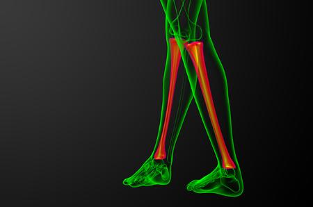 3d render medical illustration of the tibia bone - back view