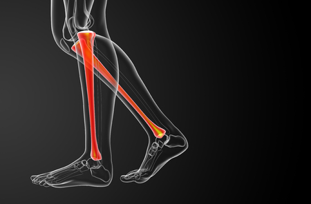 3d render medical illustration of the tibia bone - side view Banco de Imagens