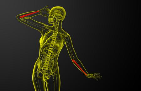 3d render medical illustration of the ulna bone - back view