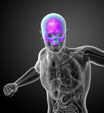 3d render medical illustration of the upper skull - front view