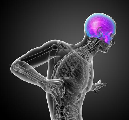 3d render medical illustration of the upper skull - side view