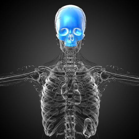 3d render medical illustration of the upper skull - front view