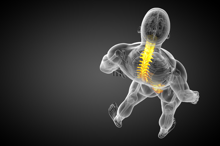 3d render medical illustration of the human spine - top view Stockfoto