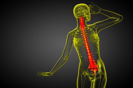 3d render medical illustration of the human spine - front view Stockfoto