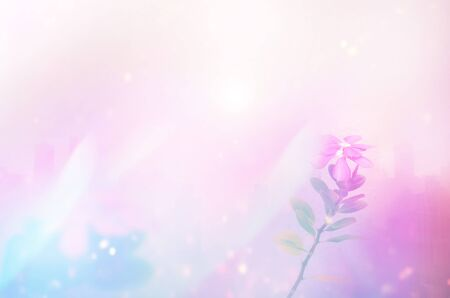 color flower for background design concept