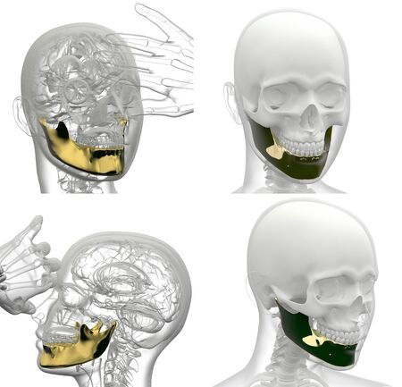 3d rendering illustration of jaw bone collection