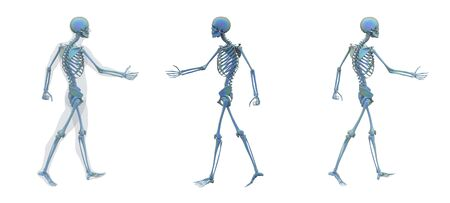 3d rendering illustration of skeleton bone anatomy Standard-Bild