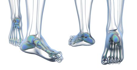 3D rendering illustration of the foot bone