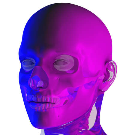 3d rendering illustraion of uper skull