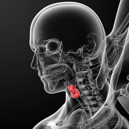 3d rendered illustration of the male larynx - side view Stock Photo