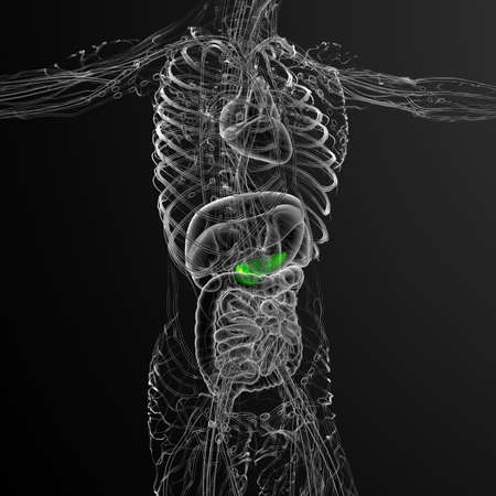 3d render medical illustration of the gallbladder and pancreas - side view