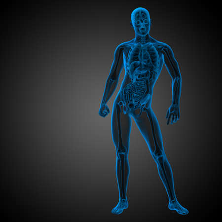 3d render medical illustration of the human anatomy - front view Stock Photo