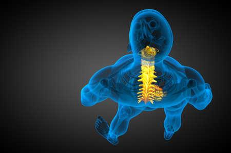 3d render medical illustration of the human spine - top view