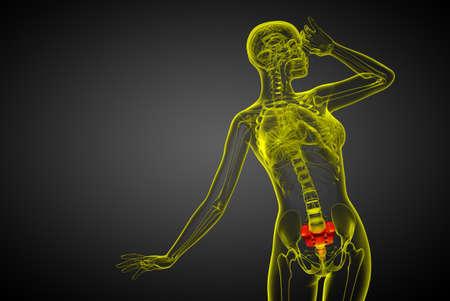 3d render medical illustration of the sacrum bone - front view