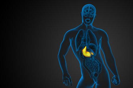 3d render medical illustration of the stomach - back view